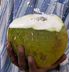 coconut-impact